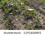nest habitat of little ringed... | Shutterstock . vector #1191606841