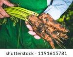 organic vegetables. fresh... | Shutterstock . vector #1191615781