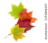 colorful autumn maple leaf... | Shutterstock . vector #1191846247