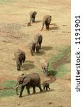 Aerial View Of African Elephan...