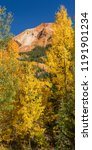 Small photo of Golden aspens on Red Mountain Pass off of the Million Dollar Highway in the Uncompahgre National Forest, Colorado. (vertical panorama)