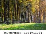 beautiful autumn landscape ... | Shutterstock . vector #1191911791