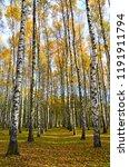 beautiful autumn landscape ... | Shutterstock . vector #1191911794