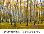 beautiful autumn landscape ... | Shutterstock . vector #1191911797