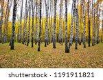 beautiful autumn landscape ... | Shutterstock . vector #1191911821