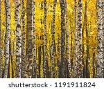 beautiful autumn landscape ... | Shutterstock . vector #1191911824