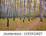 beautiful autumn landscape ... | Shutterstock . vector #1191911827