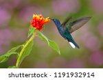 wildlife in tropic costa rica....   Shutterstock . vector #1191932914