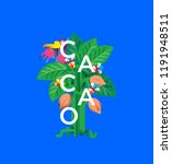 poster for chocolate and cacao... | Shutterstock .eps vector #1191948511