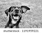 Black And White Image Of Funny...