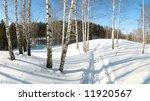birch landscape | Shutterstock . vector #11920567
