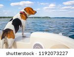 beagle standing on the back of... | Shutterstock . vector #1192073227