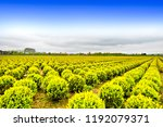 agriculture on land reclaimed... | Shutterstock . vector #1192079371