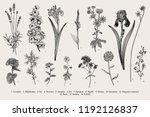 summertime. garden flowers.... | Shutterstock .eps vector #1192126837