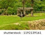 chonburi thailand 26 may 2018   ... | Shutterstock . vector #1192139161