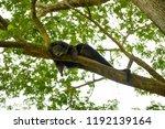 chonburi thailand 26 may 2018   ... | Shutterstock . vector #1192139164
