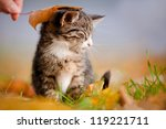 Stock photo adorable kitten under an autumn leaf 119221711