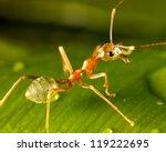 Green Ant On A Leaf