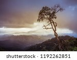 tree on a background of a dark... | Shutterstock . vector #1192262851