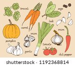 vegetable color vector set ...