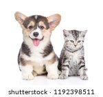 Stock photo funny corgi puppy with open mouth and sad tabby kitten together isolated on white background 1192398511