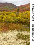 fall colors in tundra  in... | Shutterstock . vector #1192399591