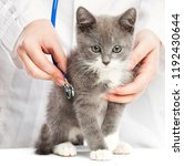 Stock photo cute little kitten in hands at the veterinarian over white background 1192430644