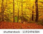 beautiful vintage autumn...   Shutterstock . vector #1192496584