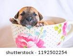 cute tea cup puppy dog | Shutterstock . vector #1192502254