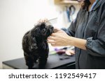 Stock photo woman are cutting hair a dog in pet store 1192549417
