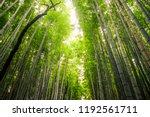 arashiyama bamboo grove of... | Shutterstock . vector #1192561711
