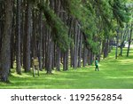 boa keaw silvicultural research ... | Shutterstock . vector #1192562854