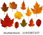 Set Of Fall Leaves Isolated On...