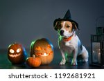 dog jack russell in costume for ... | Shutterstock . vector #1192681921