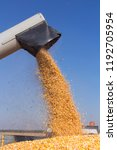corn harvest. corn falling from ... | Shutterstock . vector #1192705954