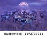 zebras in the african savannah. ... | Shutterstock . vector #1192733311