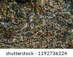 varicolored detailed texture of ... | Shutterstock . vector #1192736224