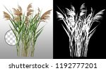 cattail and reed plant isolated ...   Shutterstock . vector #1192777201