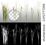 cattail and reed plant isolated ... | Shutterstock . vector #1192777204