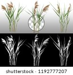 cattail and reed plant isolated ...   Shutterstock . vector #1192777207