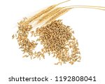 Rye grains and ears on white background