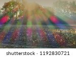 sunrays with chromatic... | Shutterstock . vector #1192830721