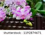 the orchid in full bloom   Shutterstock . vector #1192874671