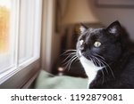 funny cat looking out window... | Shutterstock . vector #1192879081