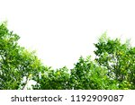 leaves isolated on white... | Shutterstock . vector #1192909087