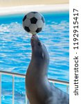 The Sea Lion Putting A Soccer...