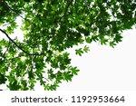 golden green leaves and... | Shutterstock . vector #1192953664