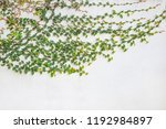 surface of green leaves... | Shutterstock . vector #1192984897