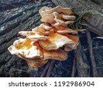 Mushrooms. Fungus Growing On...