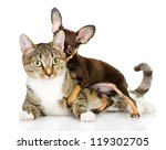 Stock photo dog and cat together the puppy whispers secrets on an ear of a cat isolated on white background 119302705